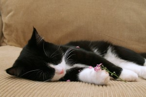 cat asleep on sofa