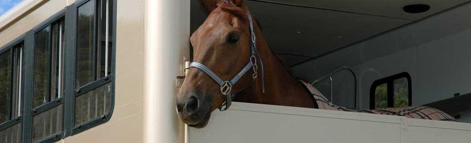 pony and horse insurance