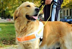 non-discriminatory-tenant-seeing-eye-dog