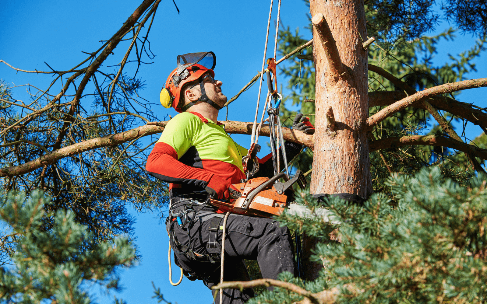 Tree surgeon working up high